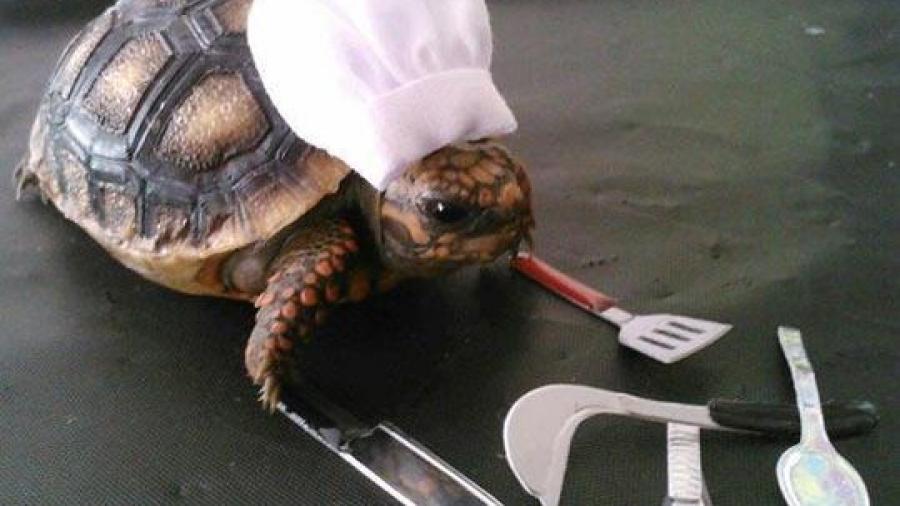 turtle-chef